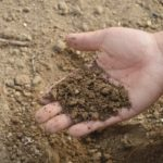 5 Easy Soil Testing You Can Do Yourselves For Growing Organic Vegetables