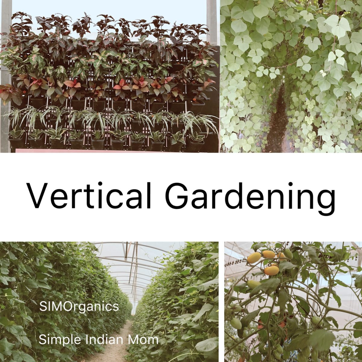 Vertical Gadening - Basics to Grow Your Own Veggies