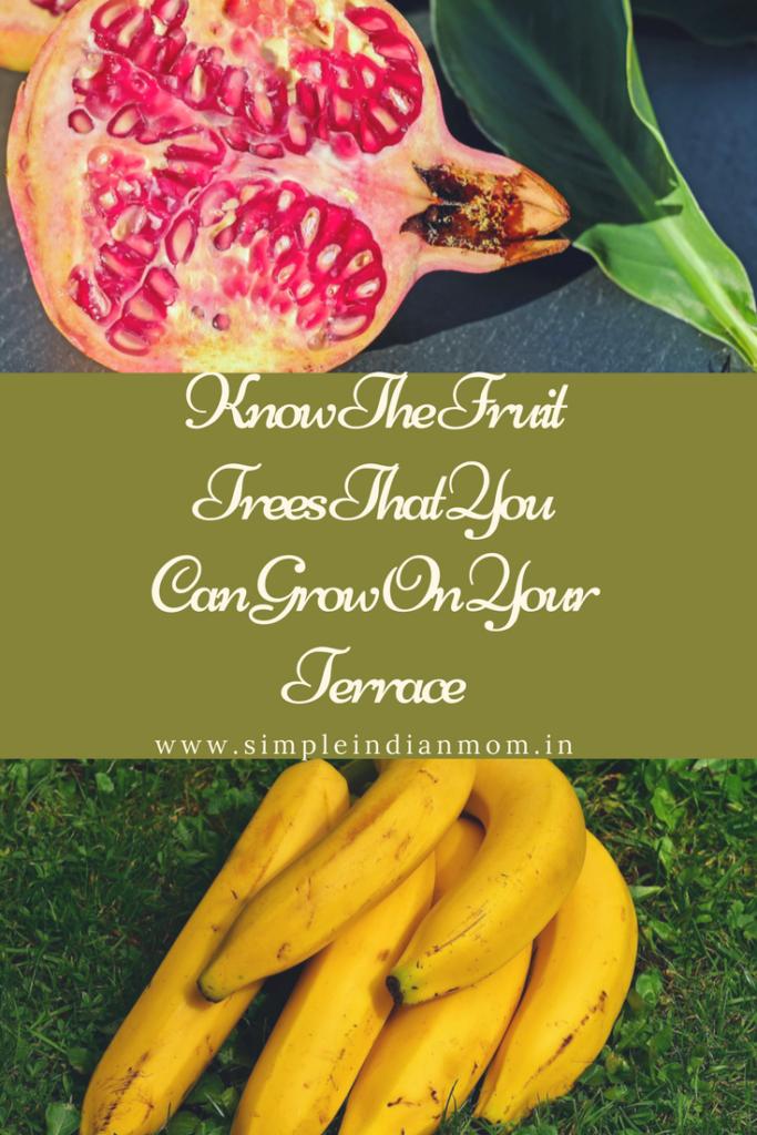 Terrace Garden Fruit Trees