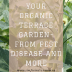 Protecting Organic Terrace Garden- From Pest, Disease and More