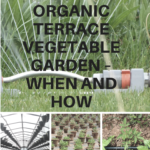 Watering Your Organic Terrace Vegetable Garden – When and How