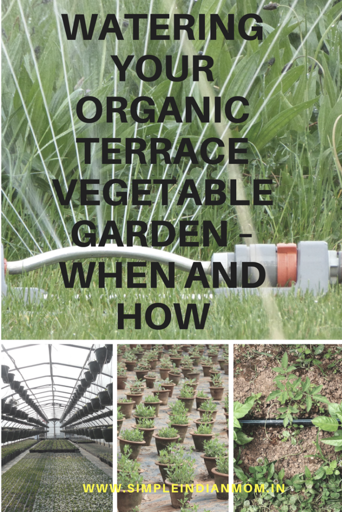Watering your organic terrace vegetable garden when and for Terrace vegetable garden india