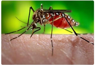 Dengue Fever - symptoms and precautions