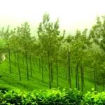 Nilgiris Tavel Destinations in India
