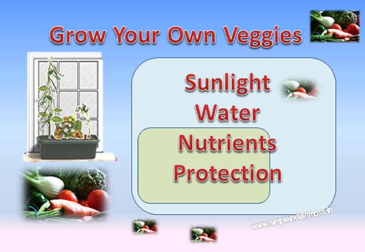 Grow Organic Veggies