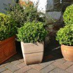 coir pith for terrace garden