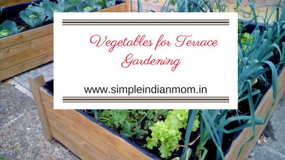 Vegetables for Terrace Gardening