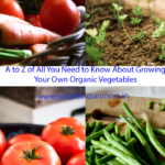 A to Z of All You Need to Know About Growing Your Own Organic Vegetables