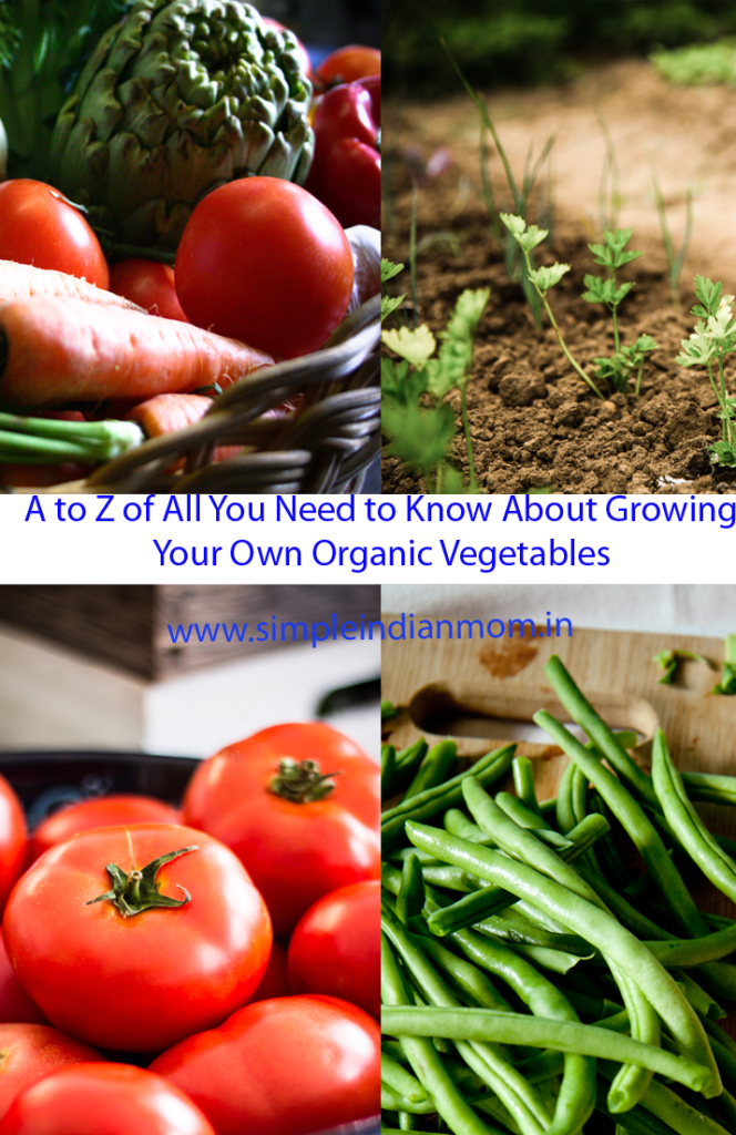 Growing Your Own Organic Vegetables