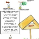 Trapping The Insects That Attack Your Organic Vegetable Garden Using Insect Traps