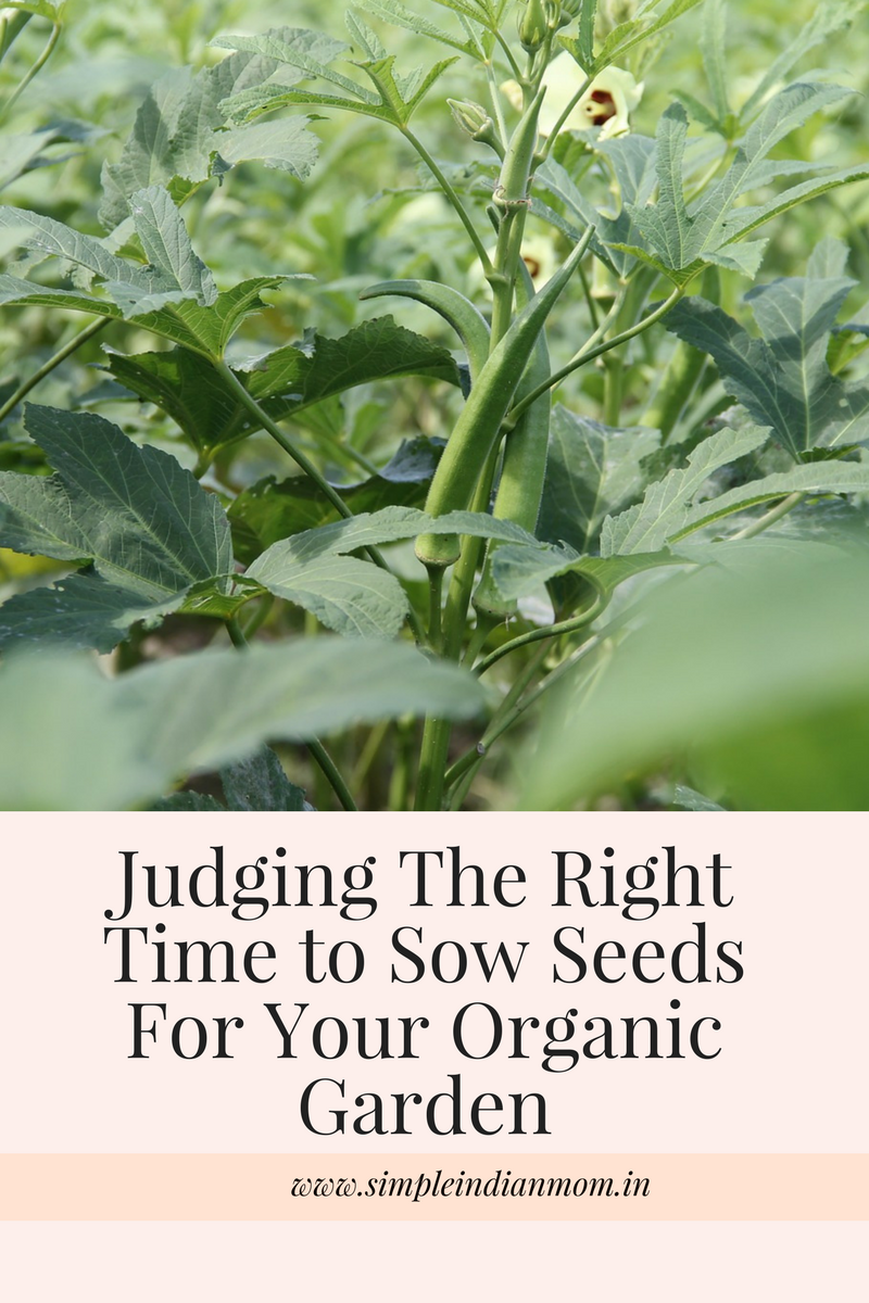 Judging The Right Time to Sow Seeds For Your Organic Garden