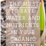 Mulching - The Must To Save Water And Nutrients In Your Organic Garden