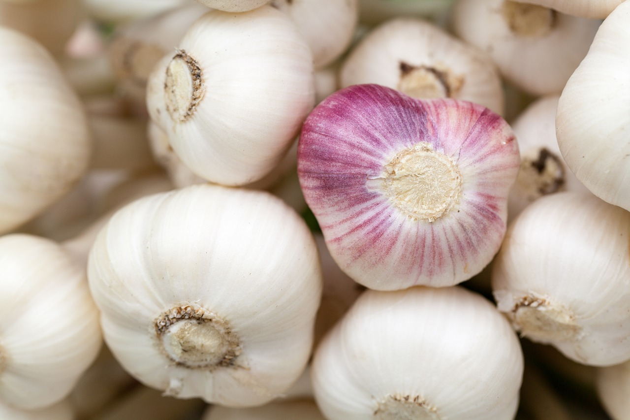 Garlic to make organic pesticide