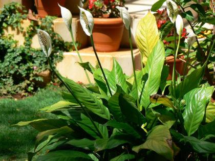 10 Indoor Plants that Keeps You Healthy