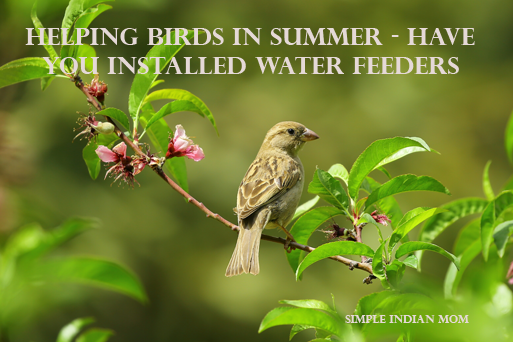 Helping Birds In Summer - Have You Installed Water Feeders