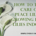 How To Take Care Of Peace Lilies – Growing Peace Lilies Indoors