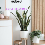 Easy Tips To Grow Snake Plant Indoors