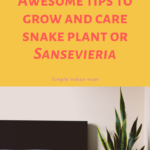 How To Take Care Od Snake Plants Indoor - A detailed Report